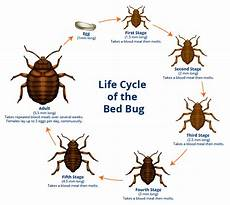 how to get rid of bed bugs and their tell tale signs