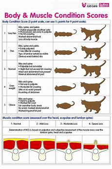 How Much To Feed A Cat Chart How Much Should I Feed My Cat The Cat Feeding Guide