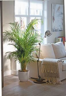 Low Light Pet Safe Indoor Plants 12 Air Purifying Houseplants Safe For Dogs Cats