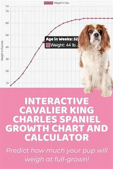 Spaniel Growth Chart Interactive Cavalier King Charles Spaniel Growth Chart And