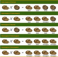Ball Python Chart 22 Best Images About Ball Pythons On Pinterest Cas