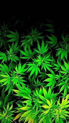 Download Weed Pictures Iphone Marijuana Wallpaper Hd Wallpapersafari