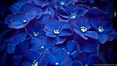 best flower desktop wallpaper flower flower wallpapers flower desktop wallpapers best