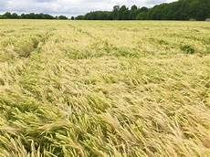 Crop Pricing Malting Barley Pricing Structure Fails Growers Yet Again