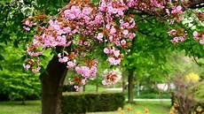 live flower wallpaper for desktop desktop wallpaper flowers 60 images