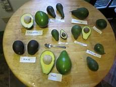 Different Types Of Avocado Forum Best Tasting Avocados