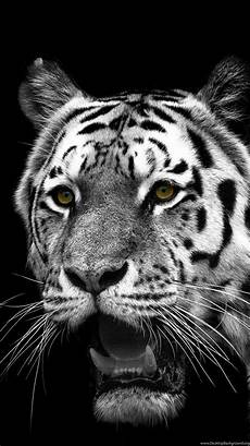 black and white tiger iphone wallpaper iphone 6s animal white tiger wallpapers id 301455 desktop