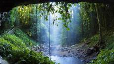 Rainforest Background Rainforest Backgrounds 60 Images