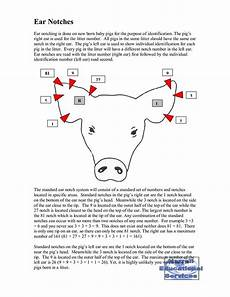 Ear Notch Pig 1000 Images About Pig Ear Notching On Pinterest
