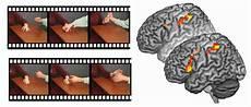 Brain Research Shows Psychopathic Criminals Do Not Lack