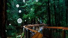 Capilano Suspension Bridge Canyon Lights Tickets Canyon Lights Show A 230 Foot Thrill Cnn Video