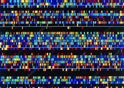Image result for human chromosomes