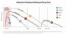 Marijuana Detection Chart Drug Detection Times For Marijuana Depend On The Test