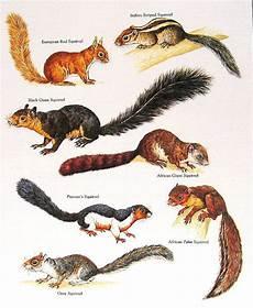 ellenor industries feeling squirrely