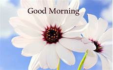 flower wallpaper with morning best morning images pics photos pictures