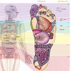 Foot Chart Bt S Foot Chart Medium Balancing Touch Reflexology