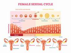 24 Day Menstrual Cycle Chart Here S What Happens On Every Day Of Your Menstrual Cycle