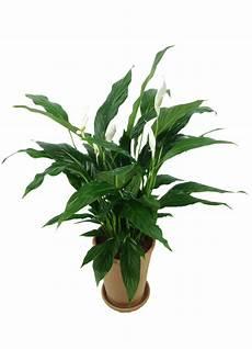 zimmerpflanzen luftreiniger 무료 이미지 나무 분기 공기 잎 식품 목초 생기게 하다 관엽 식물 화분 꽃 피는 식물