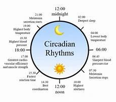 Circadian Rhythm Chart How Your Circadian Rhythm Influences Your Sleep Moona
