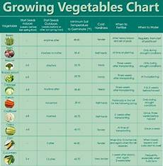 Vegetable Growing Guides Guidelines For Growing Vegetables Chart Survival