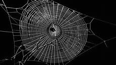 web bid spiders create graphene infused webs iflscience