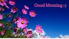 Flower Wallpaper Morning Hd by Morning