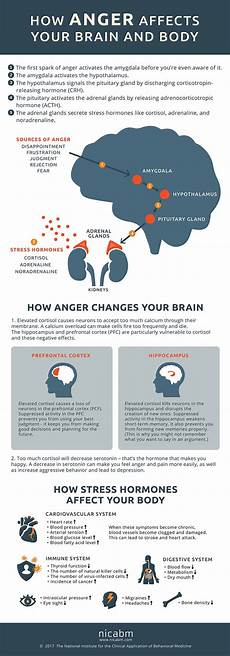 What Effect Does Human Activity Have On Many Ecosystems This Is Your Body Amp Brain On Anger Daily Infographic