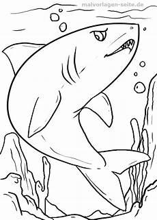 malvorlage hai tiere im wasser haie kostenlose