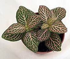 Best Plants For Low Light Terrarium 11 Best Low Light Indoor Plants For Your Home Easy House