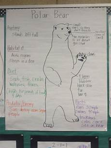 polar size chart bears charts and polar bears on pinterest