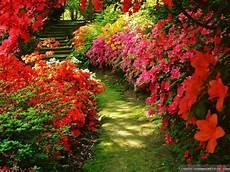 Flower Wallpaper Garden by Flowers For Garden 20 Cool Hd Wallpaper