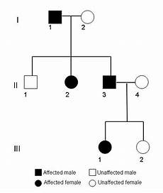 Pedigree Chart For Free Or Attached Earlobes Pedigree Analysis A Family Tree Of Traits Science Project