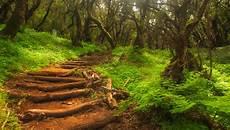 Malvorlagen Urwald Europa Europas Urw 228 Lder Es Gibt Sie Noch Und Sie Sind Wundersch 246 N