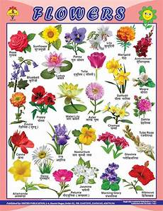 Flower Chart With Names And Pictures 22x28 Educational Charts Manufacturer In New Delhi Delhi