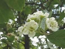 ma le canzoni come fiori uvaromatica 187 archive 187 cinque canzoni e altri fiori