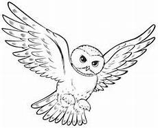 coloring snowy owl hedwig picture harry potter clip