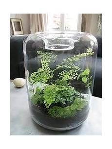 Best Plants For Low Light Terrarium What Are The Best Micro Ferns Mosses For A Small Closed