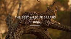 Wildlife Major 13 Best Wildlife Safaris In India Every Animal Lover Needs