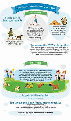 Puppy Exercise Chart How To Safely Exercise Your Dog Or Puppy Rspca Pet Insurance