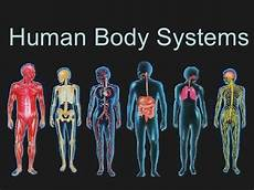 11 Body Systems Edexcel Gcse Pe Body Systems Cardiovascular Muscular