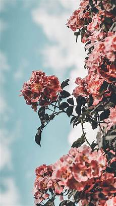 Aesthetic Flower Wallpaper Iphone by 25 Pretty Iphone Xs Wallpapers Flower Aesthetics