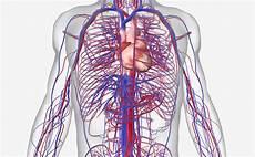 Circulatory System Organs 15 Circulatory System Diseases Symptoms And Risk Factors
