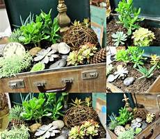 Unique Planters For Succulents Unique Flower Planter Ideas For Flowers And Succulents