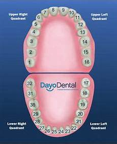 Dental Tooth Number Chart Tooth Chart With Numbers Dental
