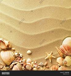 Sea Shells Background Sea Shells With Sand As Background Stock Photo Amp Stock