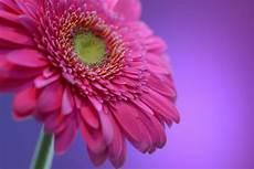 flower images hd flower image hd wallhdfree