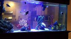Saltwater Fish Tank Lights Fish Only Saltwater Tank Under Led Lighting With Coral