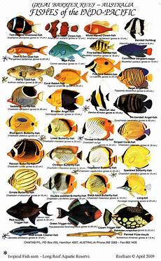 Reef Fish Identification Chart Tropical Fish Reefcare Long Reef