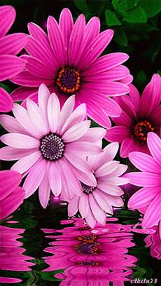 Flower Wallpaper Gif by Free Animated Flowers Free Clip Free Clip