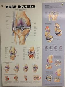 27 Best Images About Knee Anatomy On Pinterest Knee